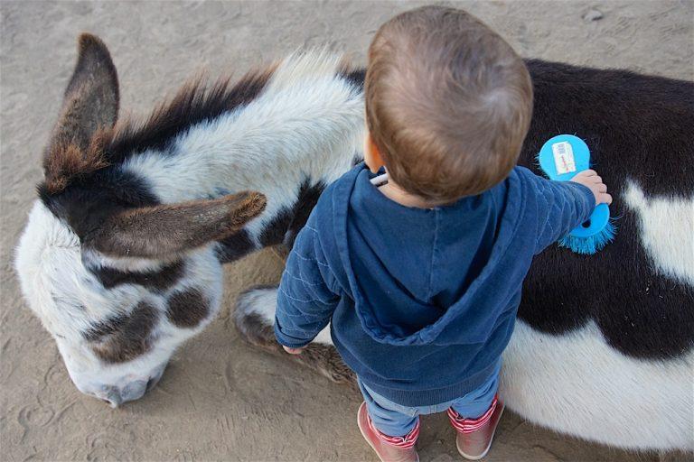 Brossage d'âne enfant